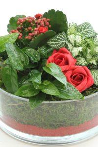 planttrend foto7