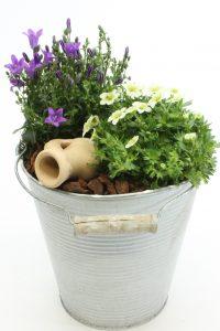 planttrend foto9