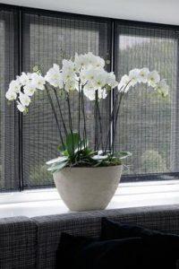 cj orchids foto1