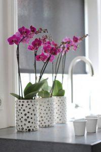 cj orchids foto4