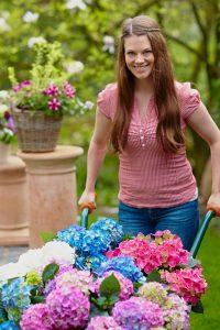 Bildunterschrift: Moderne Hortensien sind wahre Multitalente für Balkon, Terrasse und Garten. Bei richtiger Pflege blühen sie mehrfach im Jahr. (Bildnachweis: GMH/FGJ)