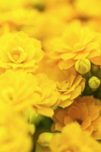 amarantis foto4